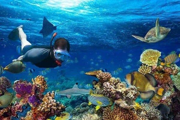 Coral Reef, Lakshadweep