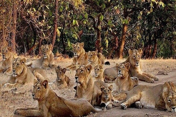 Gir Forest National Park - Junagadh
